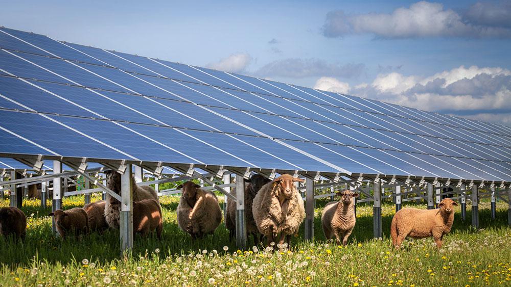Zonne-energie weiland